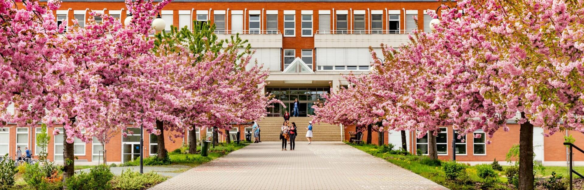 Pedagogická fakulta (PdFUHK)