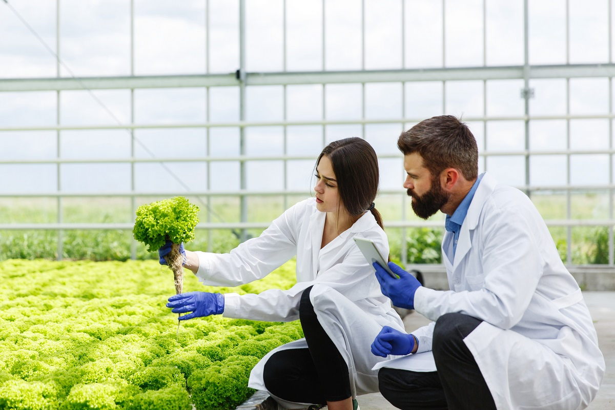 Woman and man in laboratory robes examine carefully plants in th